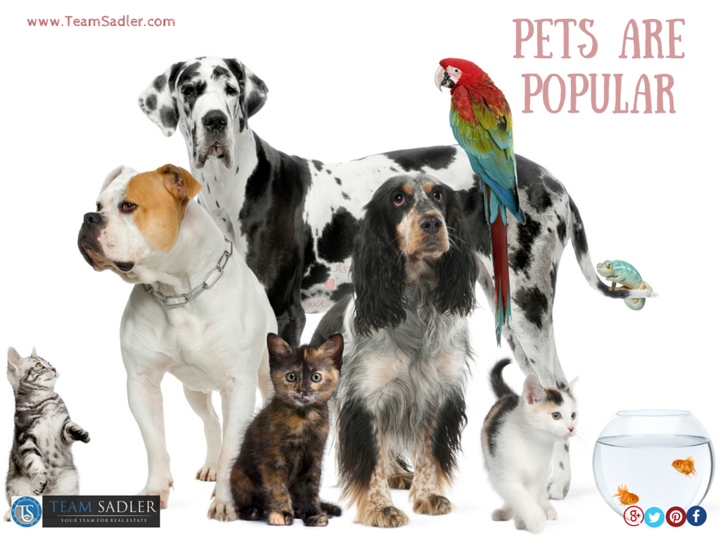 035-Photo-Pet-Policies-Photo# 1-and-Landlords-Pets-Are-Popular